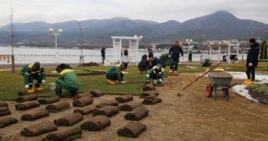 В Кабардинке появится более 4 тысяч квадратных метров нового газона